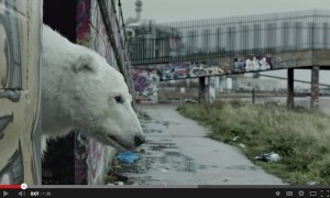 Greenpeace NZ homeless polar bear video